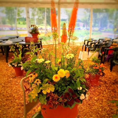 ウイッチフォードポタリーの植木鉢の寄せ植え