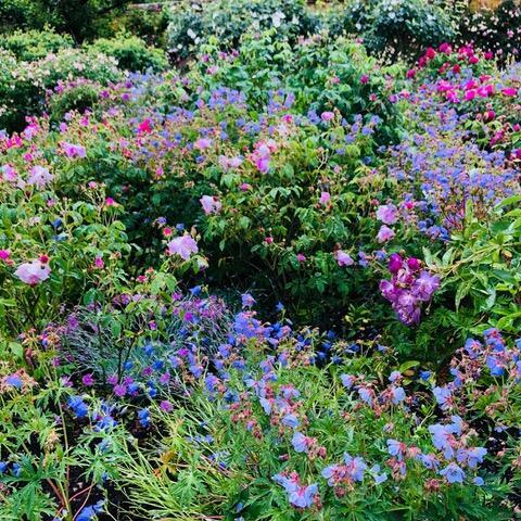 花の咲く季節に想いを寄せて