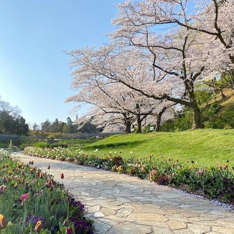 春は4~5日で、どんどん変わる@はままつフラワーパーク